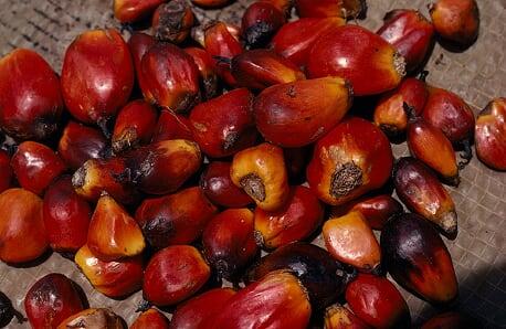 huile de palmiste savon